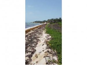 Terreno en venta en Majahual Quintana Roo con frente de...