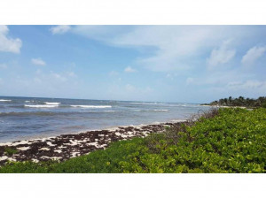 Terreno en venta en Majahual Q Roo con frente de playa